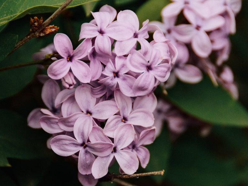 Blüteneis